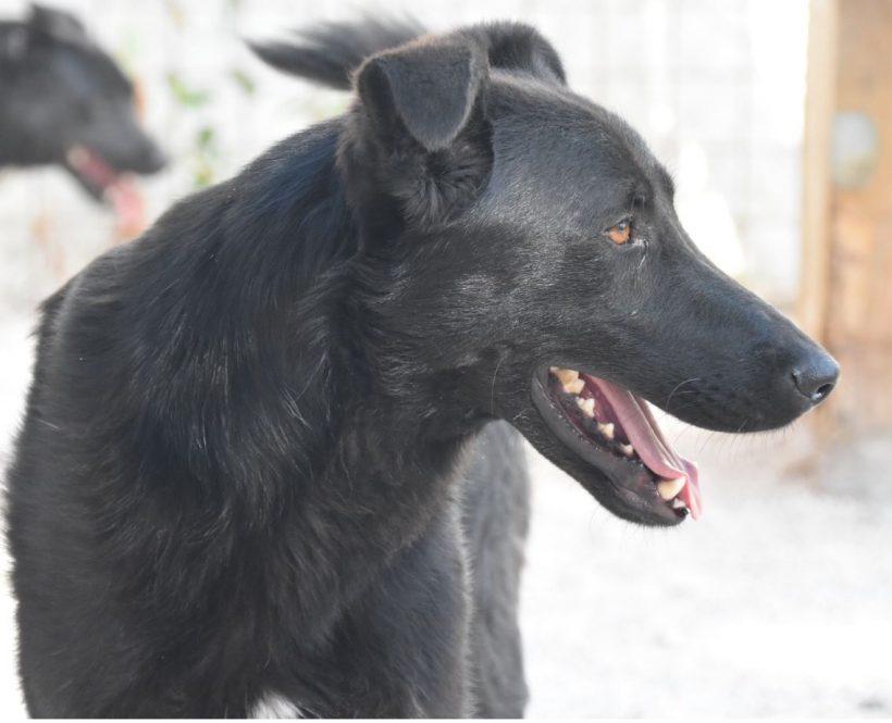 Kozino (Jacky)