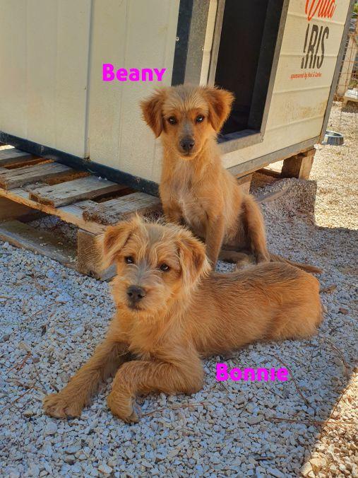 Beany